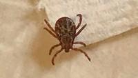 Corona Belum Juga Usai, China Laporkan Kasus Infeksi Virus Tick-Borne