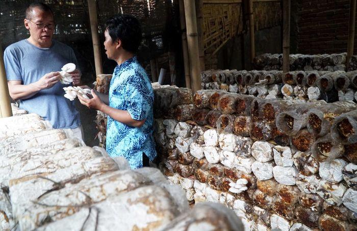 Ketua Pengurus YDBA Henry C Widjaja meninjau lokasi pembudidayaan jamur milik Hadiutama di Lombok, NTB. (YDBA).