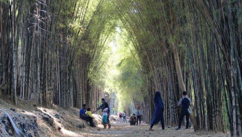 Hutan bambu di Surabaya