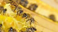 Sebabkan Kematian Lebah, Petani di Austria Dibui