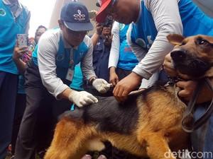 Sukabumi Daerah Tertular Rabies Tertinggi di Jabar