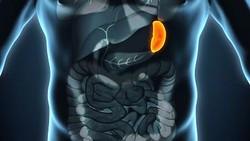 Apa yang Tuhan berikan termasuk organ tubuh pasti berguna. Tapi bila terpaksa diangkat karena kondisi medis, orang tetap bisa hidup tanpa deretan organ berikut.