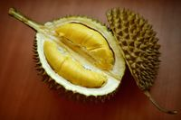 Peneliti Beberkan Fakta Ilmiah Dibalik Bau Menyengat Durian