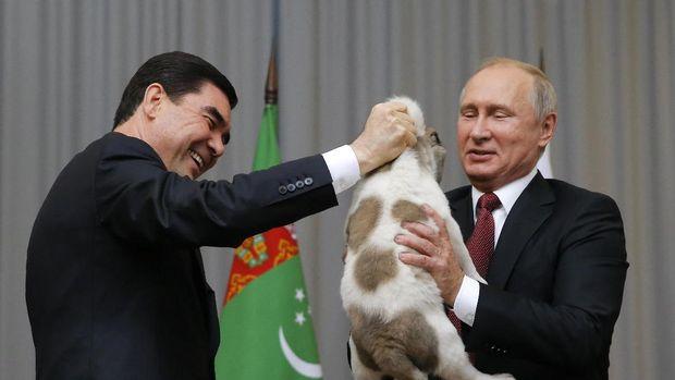 Presiden Turkemenistan menyerahkan anak anjing alabai ke Putin