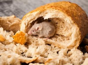 Irlandia Hadapi Masalah Serius Kebersihan pada Makanan Siap Santap