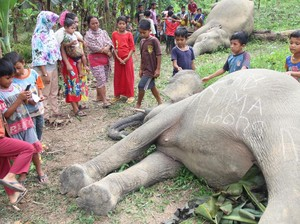 2 Gajah Mati di Aceh Timur Berusia 10 dan 20 Tahun