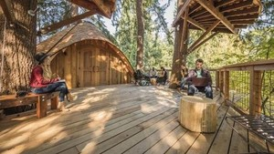 Microsoft Bangun Rumah Pohon Buat Rapat Karyawan