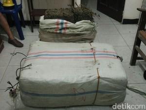 Petani di Aceh Diciduk karena Bawa 75 Kg Ganja, 3 Temannya Kabur