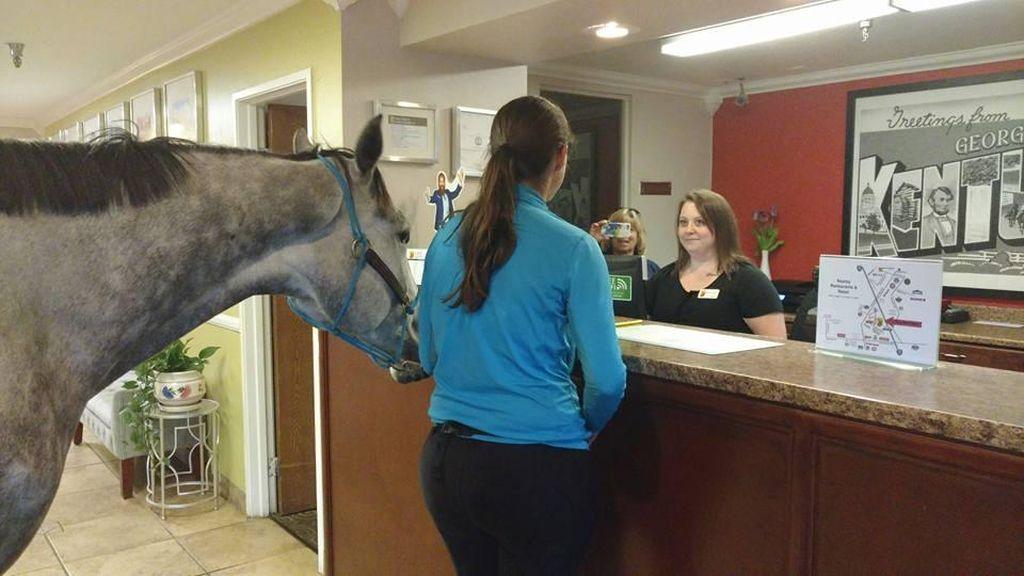Cewek Ini Bawa Kudanya ke Kamar Hotel, Alasannya Tak Terduga