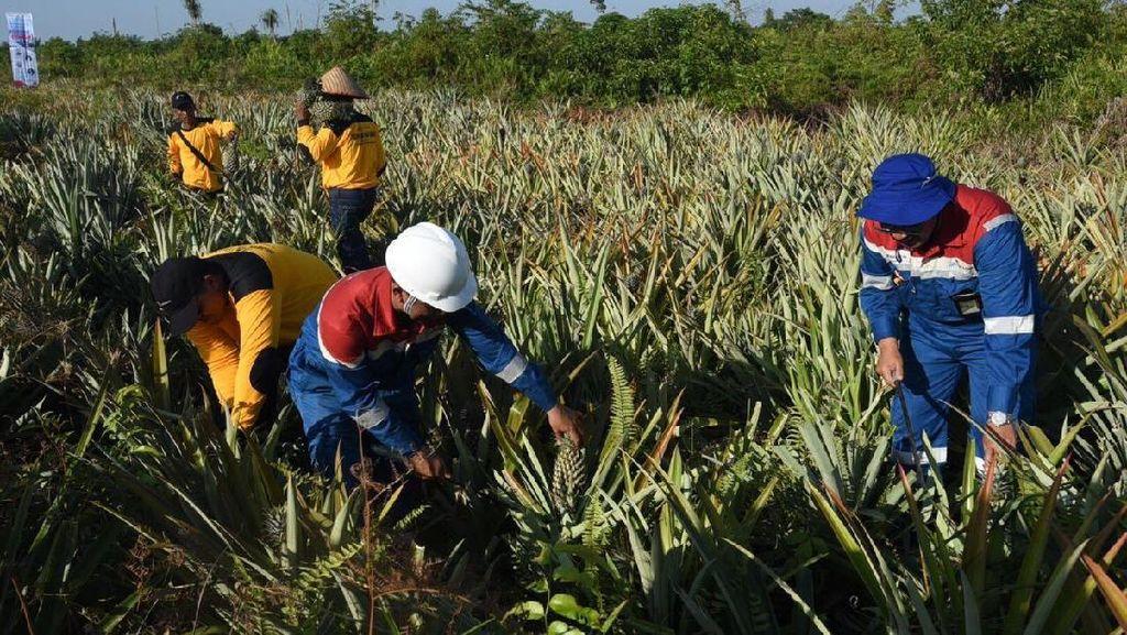 Pertamina Gandeng Petani Riau Olah Lahan Bekas Kebakaran Hutan