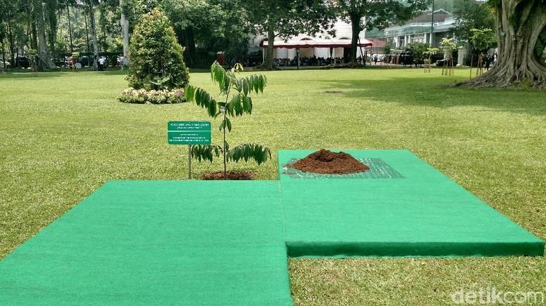 Jokowi dan Emir Qatar Tanam Pohon Eboni di Depan Istana Bogor