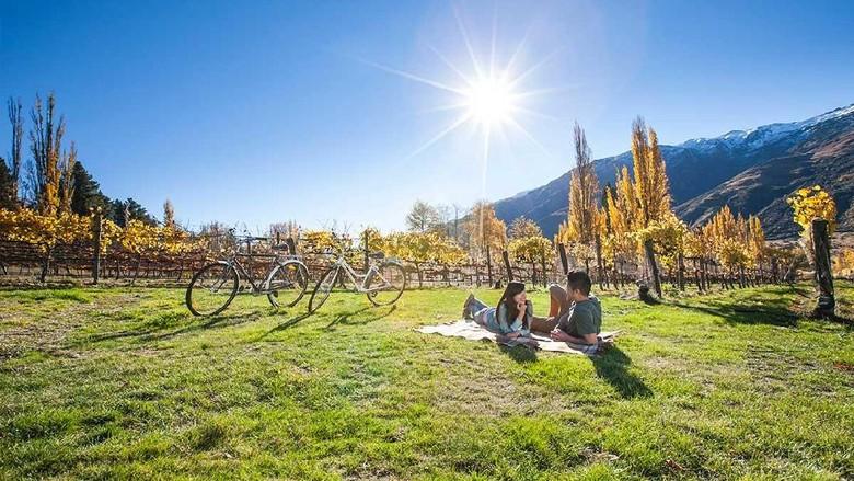 Foto: Ilustrasi New Zealand (dok Tourism New Zealand)