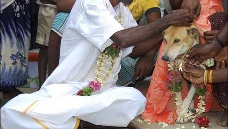 Pernikahan manusia dengan anjing di India (BBC)