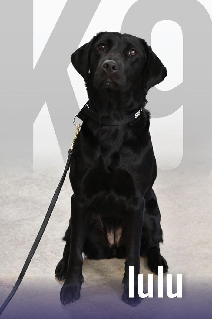 Lulu, anjing yang dipecat CIA (Foto: CIA)
