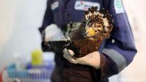 Pertamina Ajak Milenial Dukung Pelestarian Elang Bondol