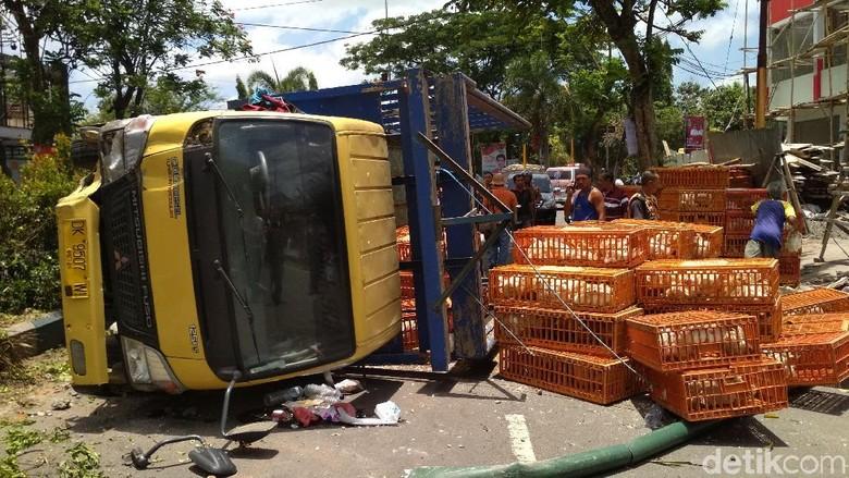 Truk Pengangkut 1.000 Ayam Potong Terguling di Tulungagung
