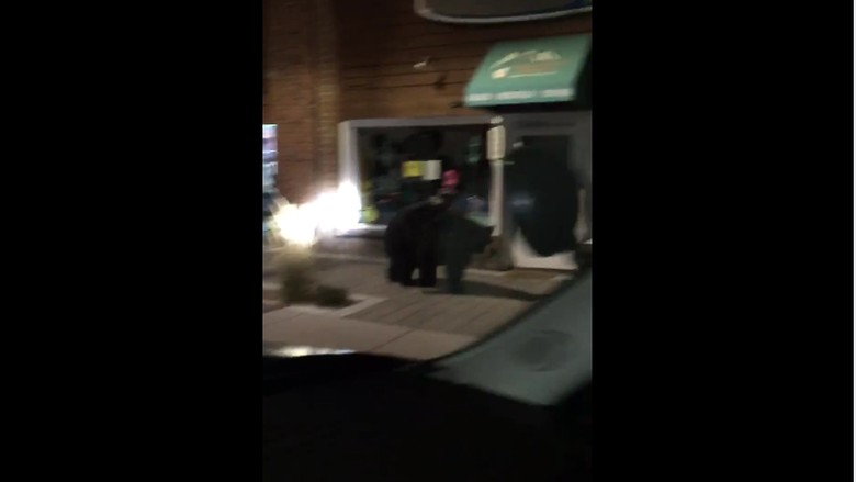 Waduh, Beruang Hitam Besar Berkeliaran di Pertokoan California