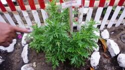 Masyarakat di Desa Pinilih, Sulut punya kebiasaan menanam dan mengonsumsi tanaman obat. Bisa ditanam di mana saja, lho.