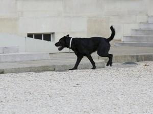 Waduh! Presiden Prancis Rapat, Anjingnya Nyelonong Kencing
