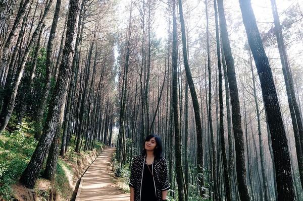 Gregoria juga pernah wisata ke Bukit Moko di Jawa Barat. Spot berfoto di antara pepohonan ini memang instagramable (greegoriaa/Instagram)