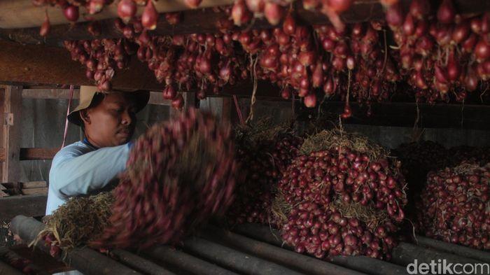 Ilustrasi bawang merah Brebes (Foto: Imam Suripto/detikcom)