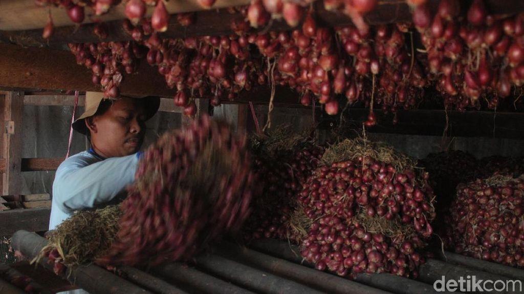 125.000 Ton Bawang Merah di Petani Belum Terserap Pasar
