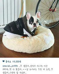 Anjing Choi Siwon