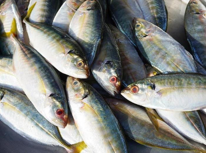 Kalau ada ikan hidup masuk ke dalam tenggorokan apa yang akan kamu lakukan? (Foto ilustrasi: Istimewa)