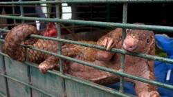 4 Hewan yang Sempat Disebut Bisa Jadi Asal-usul Virus Corona COVID-19