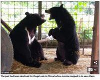 Kok Bisa? Lidah Beruang Kena Kaki Gajah