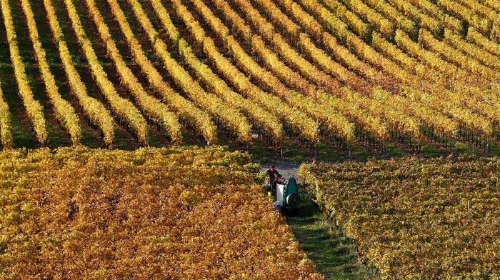 A man works on a sunny autumn morning in the UNSECO listed vineyards of the village of Riex in Bourg-en-Lavaux, Switzerland October 27, 2017. REUTERS/Denis Balibouse