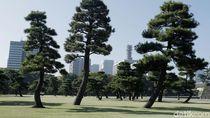 Masuk Bulan Juni, Jepang Kembali Buka Tempat Wisata