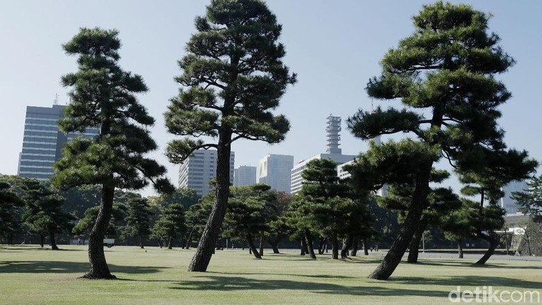 Tokyo Imperial Palace merupakan kediaman kaisar Jepang yang sangat dihormati. Selain menjadi istana kekaisaran, tempat ini pun menjadi objek wisata menarik di Tokyo.