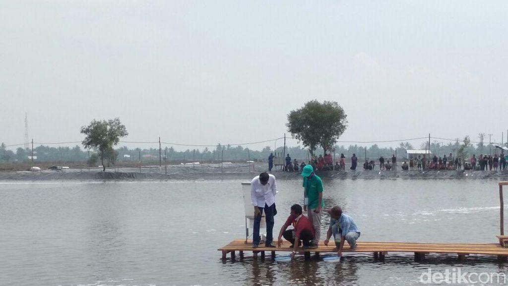 Tebar Benih Udang di Bekasi, Jokowi: 3-4 Bulan Saya Cek Lagi