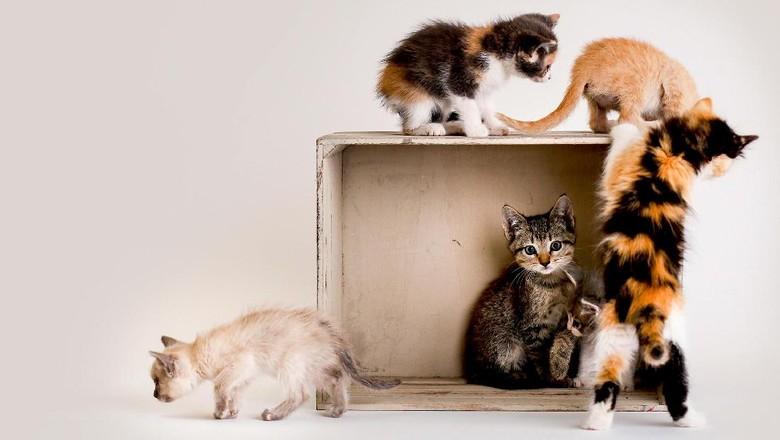 Ilustrasi kucing-kucing yang menggemaskan (Catfest London)