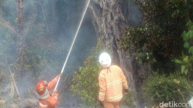 Pohon Beringin Tua Di Semarang Terbakar Dan Timpa Rumah Warga
