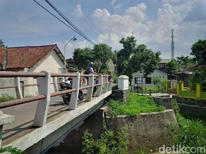 Warga Resah 3 Ekor Ular Piton Muncul di Jembatan di Semarang