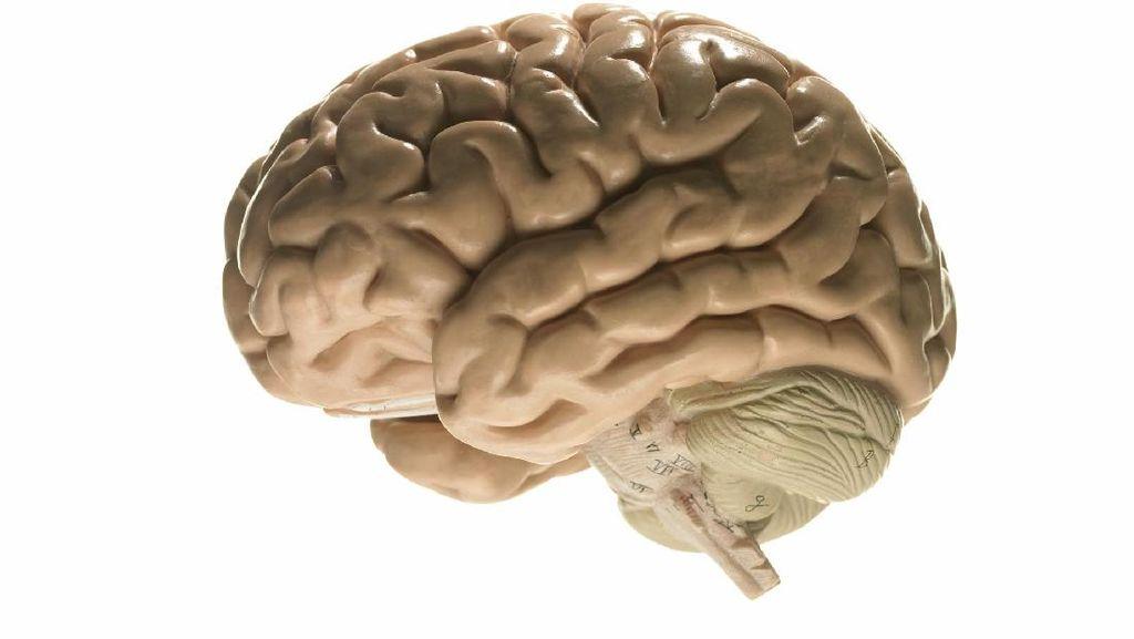 Kenapa Glioblastoma Disebut Jenis Kanker Otak yang Ganas?