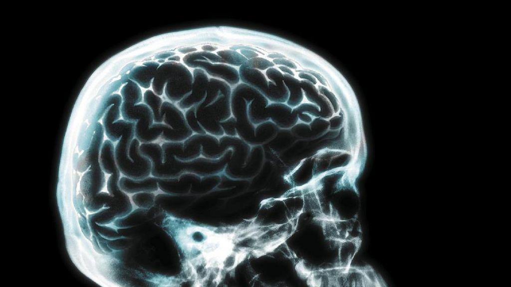 Tak Sadar, Ada Cacing Pita yang Memakan Otak Pria Ini Selama 15 Tahun