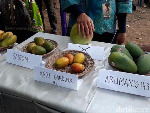 Mangga pisang, varietas mangga agri gardina 45/