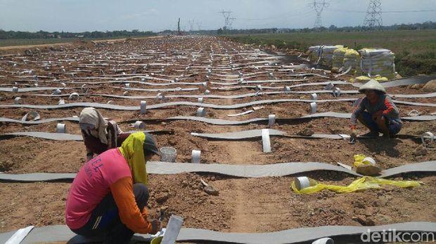 Penyelesaiam proyek jalan tol di pekalongan