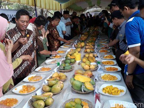 Varietas baru mangga pisang di Pasuruan/