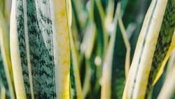 Bukan hanya sedap dipandang, tanaman juga mampu memberi energi dan hawa positif untuk tidur lebih nyenyak. Berikut adalah 6 tanaman kaya manfaat tersebut.