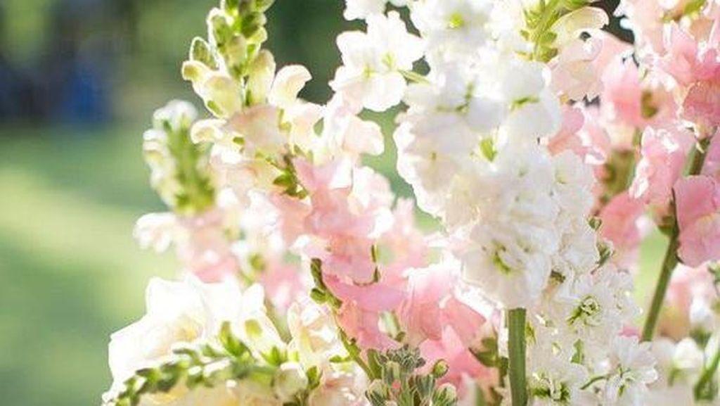Anggrek Hingga Lili, Bunga-bunga Favorit dalam Dekorasi Pernikahan