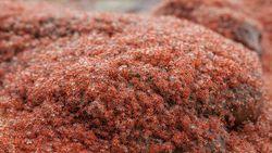 Sisi Lain Pulau Natal, Dijuluki Karpet Merah Saat Musim Hujan