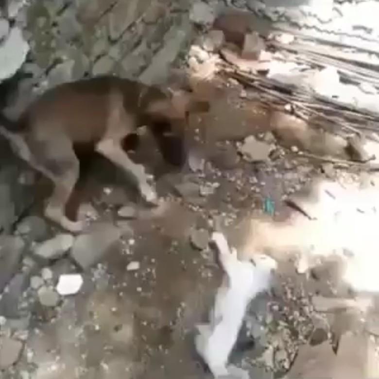 Pencinta Hewan Polisikan Perekam Video Viral Anjing Bantai Kucing