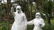 Kontak dengan Sapi, 22 Warga di Gorontalo Terserang Antraks