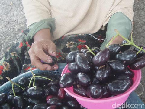 buah jamblang atau buah juwet
