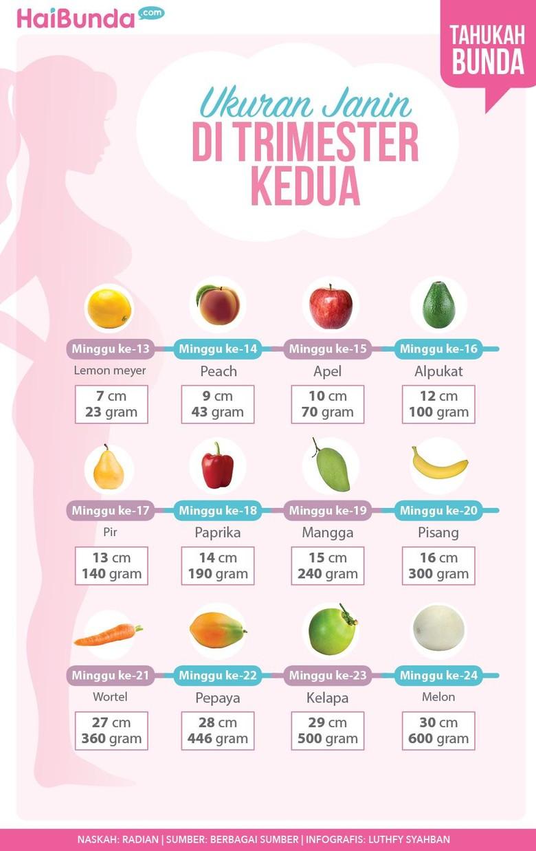 Ukuran dan bentuk janin di trimester kedua/ Foto: Infografis