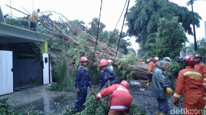 Timpa Rumah, Pohon Tumbang di Kompleks Setneg Baru Masih Dievakuasi